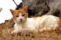 坐在草的猫 免版税库存图片