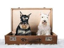 坐在葡萄酒手提箱的狗 图库摄影