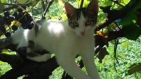坐在藤的小白色猫 免版税库存照片