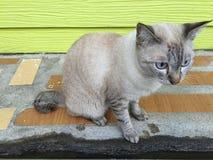 坐在街道旁边和看人的猫走在街道 免版税库存图片