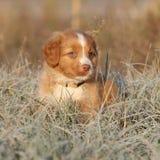 坐在软的霜的美丽的小狗 免版税库存照片