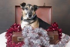坐在闪亮金属片中的一个手提箱里面的小狗狗 免版税图库摄影