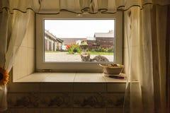 坐在雨下在仓前空地和看对地窖家的窗口的猫 库存图片