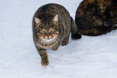 坐在雪的一只离群街道猫在冬天 库存照片