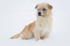 坐在雪的逗人喜爱的狗 免版税库存照片