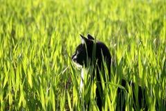 坐在高草的猫 图库摄影