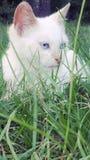 坐在高草的猫 库存图片