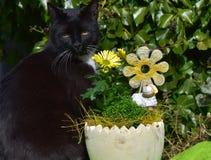 坐在黄色花和一只白色陶瓷绵羊附近的香的雄猫在庭院里 免版税库存图片