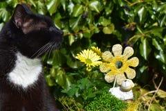 坐在黄色花和一只白色陶瓷绵羊附近的香的雄猫在庭院里 库存图片