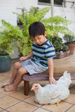 坐在他的围场的小男孩在宠爱他的宠物鸡的城市 免版税库存照片