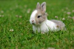 坐在绿草的兔宝宝 免版税库存照片