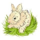 坐在绿草的复活节兔子  库存图片
