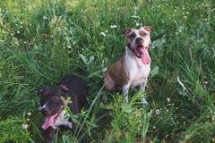 坐在绿草的狗 库存照片