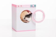 坐在洗衣机的滑稽的仓鼠 免版税库存图片