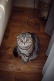 坐地板和调查透镜的好奇猫 免版税库存照片