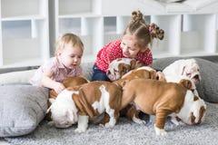 坐地毯和使用与小狗牛头犬的逗人喜爱的女孩 免版税库存图片
