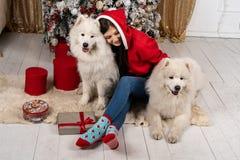 坐地面在圣诞树附近和拥抱白色狗的圣诞老人毛线衣的年轻逗人喜爱的女孩 免版税库存照片