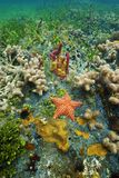 坐垫海星水下在五颜六色的海底 图库摄影