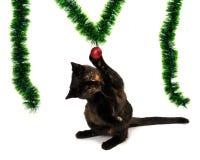坐它的后腿和使用与红色圣诞节的小猫 库存照片