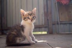 坐小的小猫在阳光下 免版税图库摄影