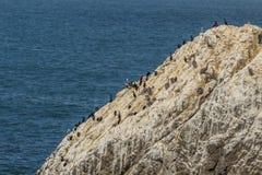 坐岩石的鸟和海鸥 免版税库存图片