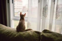坐沙发和看窗口的小小猫 免版税图库摄影