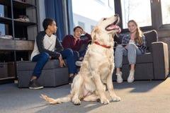 坐沙发和看金毛猎犬狗的少年坐地板 免版税图库摄影