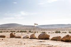 坐沙漠的两只黑乌鸦鸟落后路标 免版税库存照片