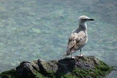 坐海鸟海鸥的岸 库存照片