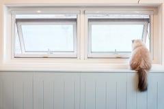 坐由窗口的白色毛茸的猫 免版税库存照片