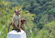 坐由路的两只小猴子 免版税图库摄影