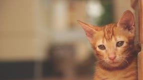 坐由黄色墙壁-哀伤的面孔的逗人喜爱的小的猫 免版税图库摄影