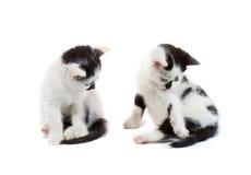 坐白色的黑色小猫 免版税库存照片