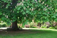 坐的地方在树荫下 免版税库存照片