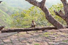 坐的孩子猴子 库存图片