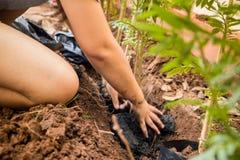 坐的工作者种植在孔的树用她的手 库存图片
