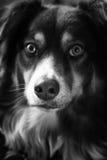 坐的狗 免版税图库摄影