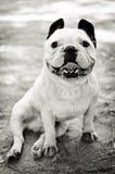 坐的狗B&W 库存照片