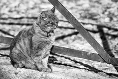 坐的猫外面 库存图片