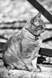 坐的猫外面 免版税图库摄影