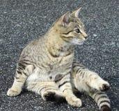 坐的猫 库存照片
