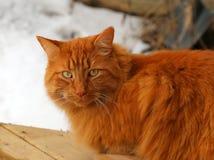 坐的虎斑猫外面 库存照片