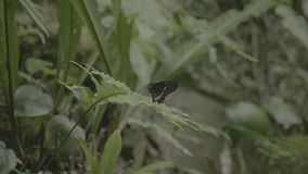 坐的蝴蝶特写镜头在绿色植物的 股票视频