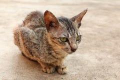 坐的街道猫 免版税库存照片