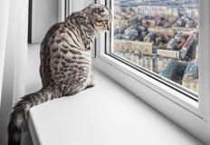 坐窗口基石和看多雨城市的猫 免版税图库摄影