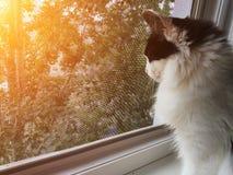 坐窗台和看窗口的猫 免版税库存照片