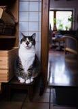 坐象古老雕塑的猫 免版税库存照片
