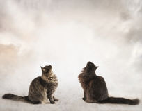 坐直和看入云彩的两只猫 免版税库存图片