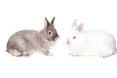 在外形的二只逗人喜爱的复活节兔子 图库摄影
