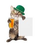 坐直的猫 库存照片